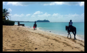 Horseback riding on the beach in St Croix